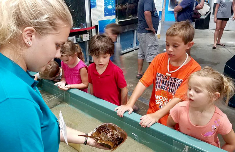 Dauphin Island Estuarium Encyclopedia Of Alabama