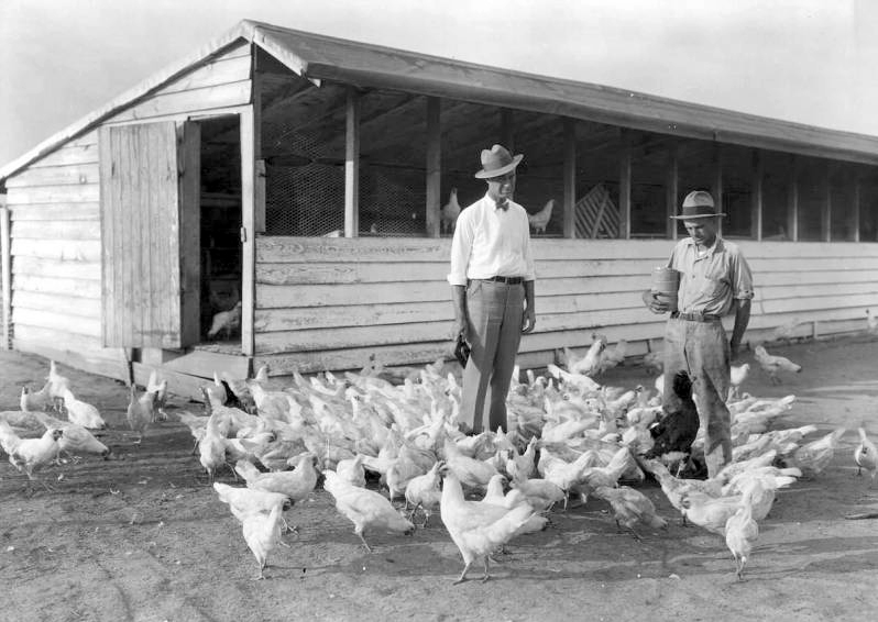 Poultry Industry in Alabama   Encyclopedia of Alabama